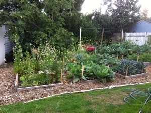 Small garden beds can produce a lot of food!