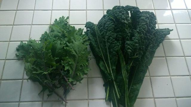 Dino Kale-Curly Kale