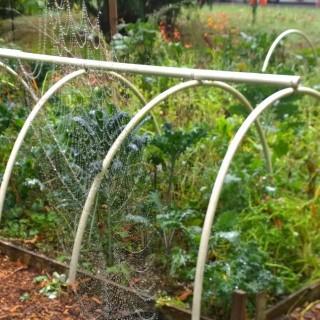 Spider Web Namaste Nutritionist Garden